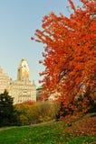 De kleuren van de daling bij Central Park. Stock Afbeeldingen