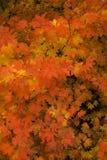 De kleuren van de daling - bladeren royalty-vrije stock foto
