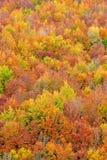 De kleuren van de daling in de herfstseizoen Stock Foto