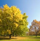 De kleuren van de daling in het park. Stock Fotografie