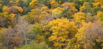 De Kleuren van de Daling van Connecticut Stock Foto's