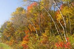 De Kleuren van de herfst Stock Fotografie