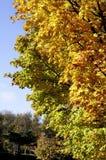 De Kleuren van de herfst Stock Foto