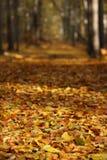 De kleuren van de herfst Stock Afbeeldingen