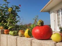 De kleuren van de herfst Stock Foto's