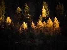 De kleuren van de herfst Stock Afbeelding