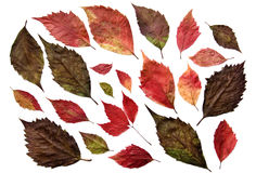 De kleuren van de herfst Royalty-vrije Stock Foto's