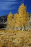 De kleuren van de herfst in bergen Stock Foto's