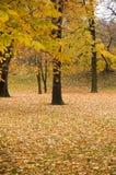 De kleuren van de herfst in bos stock fotografie