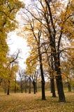 De kleuren van de herfst in bos stock foto