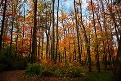 De Kleuren van de herfst in de Bossen van Pennsylvania Royalty-vrije Stock Foto's