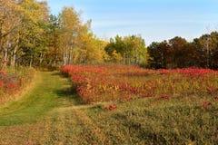 De kleuren van de herfst in de weide Stock Afbeelding
