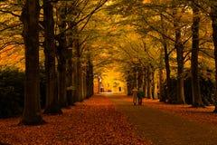 De kleuren van de herfst in het bos stock foto's