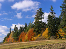 De kleuren van de herfst in het bos, Royalty-vrije Stock Foto