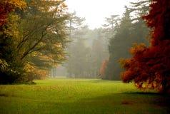 De kleuren van de herfst in het mistige bos Royalty-vrije Stock Foto's