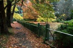De kleuren van de herfst op de bladeren Stock Afbeelding