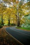 De kleuren van de herfst op een reisweg Royalty-vrije Stock Foto's
