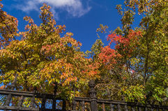 De kleuren van de herfst van Moskou Stock Foto's