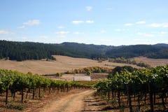 De Kleuren van de herfst in Wijngaard Royalty-vrije Stock Foto's