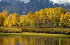 De kleuren van de herfst in Wyoming royalty-vrije stock foto's