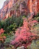 De Kleuren van de herfst in Zions Stock Afbeelding