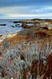 De kleuren van de kust van Californië Stock Foto
