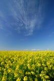 De kleuren van de lente Royalty-vrije Stock Foto