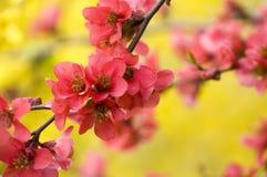 De kleuren van de lente Stock Foto's