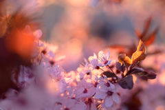 De kleuren van de lente stock foto