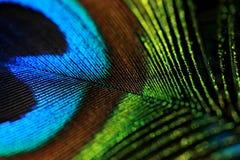 De kleuren van de veer Stock Afbeeldingen