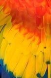 De kleuren van de veer - rood en blauw en geel Stock Afbeelding