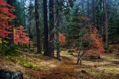 De kleuren van de herfst in bos Stock Afbeeldingen