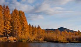 De kleuren van de herfst zijn koud-waterrivieren van Magadan stock fotografie
