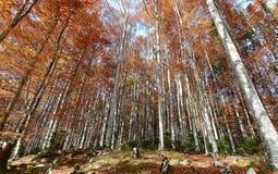 De kleuren van de herfstbossen stock afbeeldingen