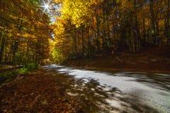 De kleuren van de de herfstweg stock afbeelding
