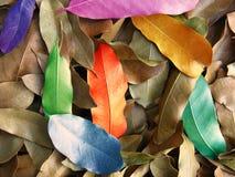 De Kleuren van het blad Stock Foto's