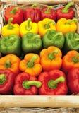 De kleuren van het capsicum Stock Foto