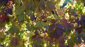De kleuren van de het parkdaling van de de herfststad, vier seizoenen stock footage