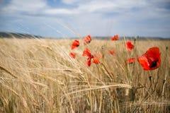 De kleuren van de zomer bloeien gebieden royalty-vrije stock afbeelding