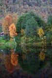 De kleuren veranderen in het bos royalty-vrije stock afbeelding