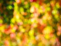 De kleurenachtergrond van de herfst Royalty-vrije Stock Foto's