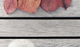 De kleurenbladeren en de houten vloer Royalty-vrije Stock Afbeelding