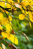 De kleurenbladeren van de herfst Stock Afbeelding