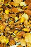 De kleurenbladeren van de herfst Royalty-vrije Stock Afbeelding