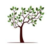 De kleurenboom met doorbladert stock illustratie