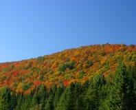 De kleurenheuvel en bomen van de herfst stock afbeeldingen