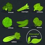 De kleurenpictogrammen van chlorofylgroenten voor Web en mobiel ontwerp worden geplaatst dat Stock Foto's