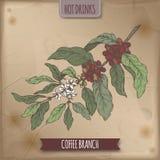 De kleurenschets van de koffietak met bonen en bloemen op uitstekende achtergrond Hete drankeninzameling Stock Foto
