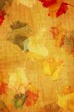 De kleurentextuur van Grunge van de daling Stock Foto