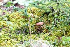 De Kleurrijk Paddestoel en Forest Undergrowth van Alaska Royalty-vrije Stock Afbeeldingen